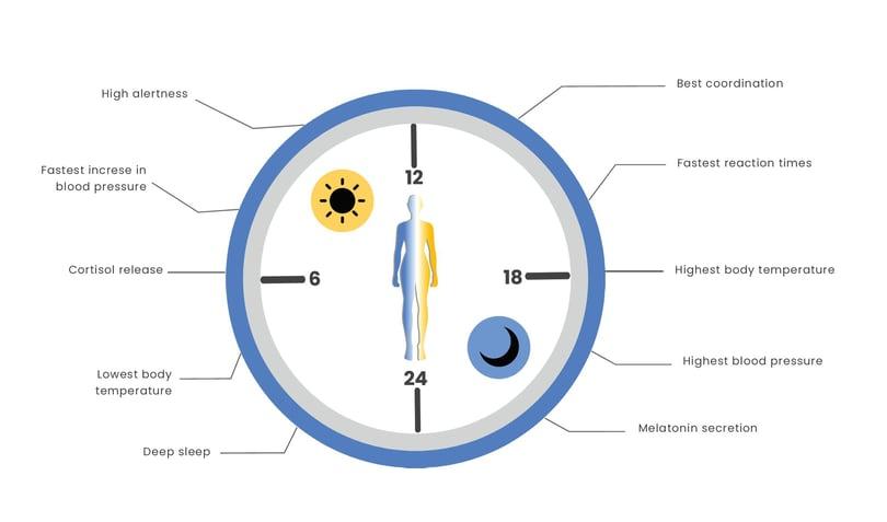 circadian-clock-cover